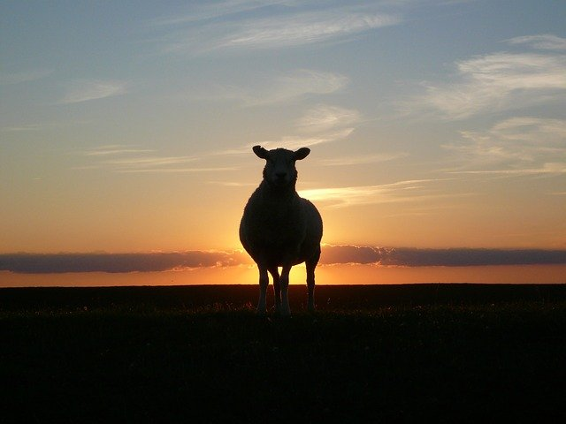 sunset-50494_640.jpeg